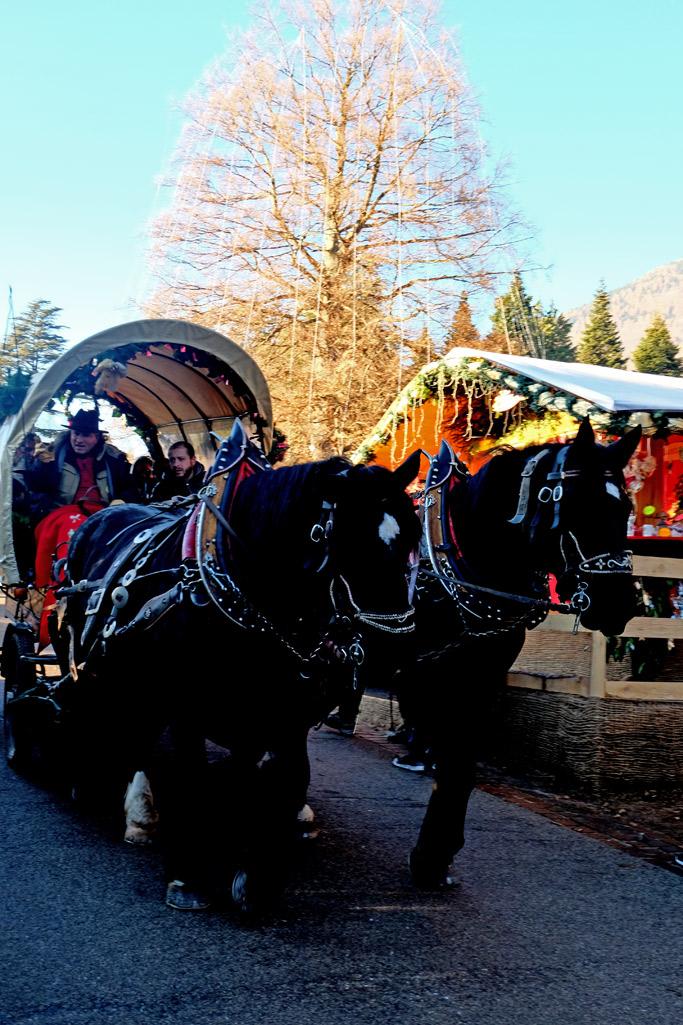 carrozza di cavalli ai mercatini di natale
