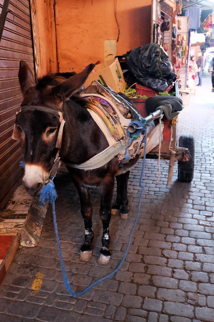 marrakech asino
