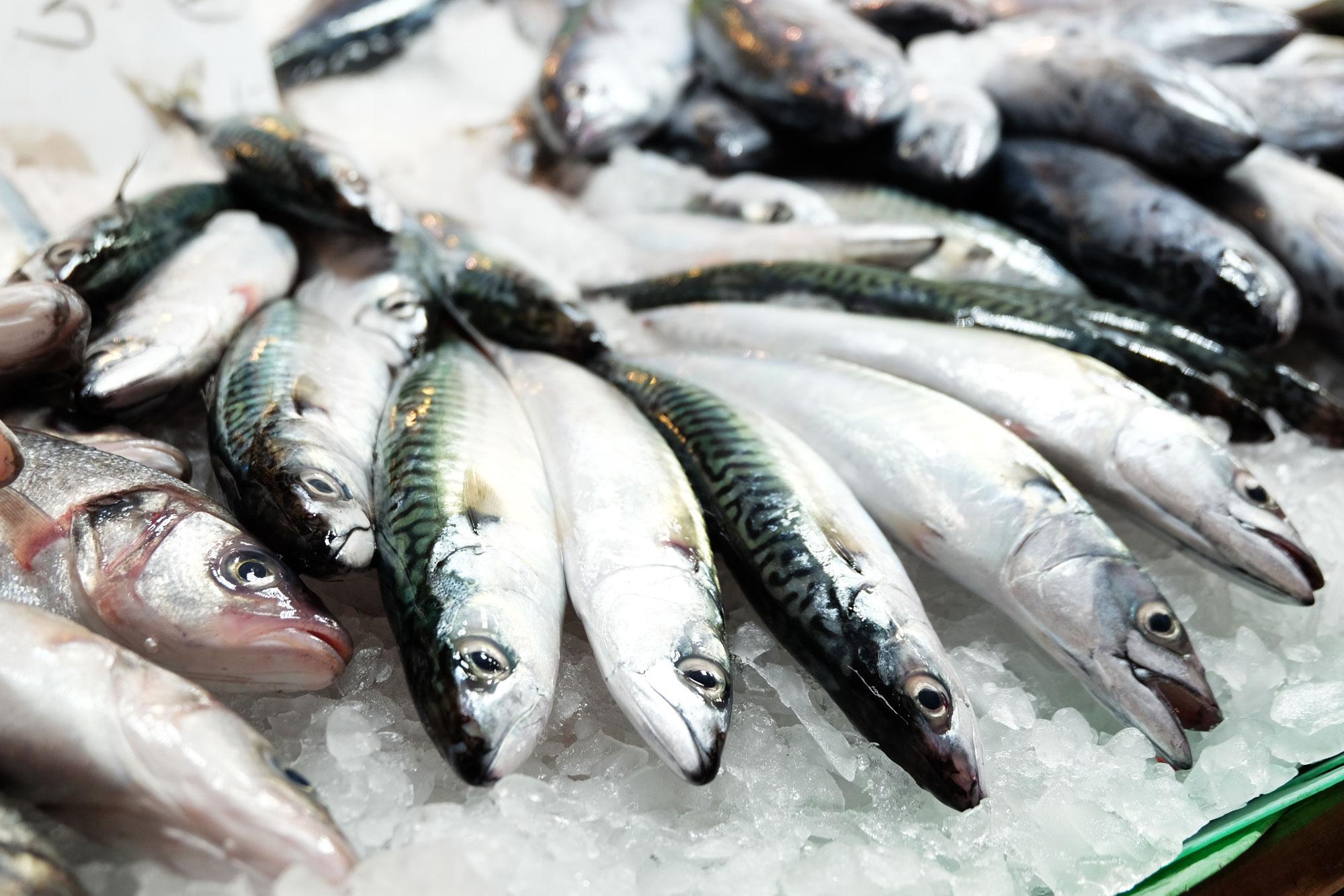 mercato-bouqueria-pesce