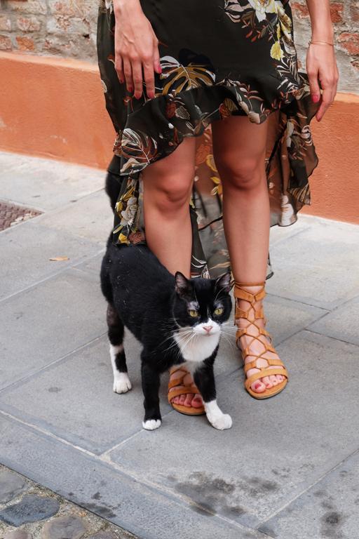 Ferrara gatto