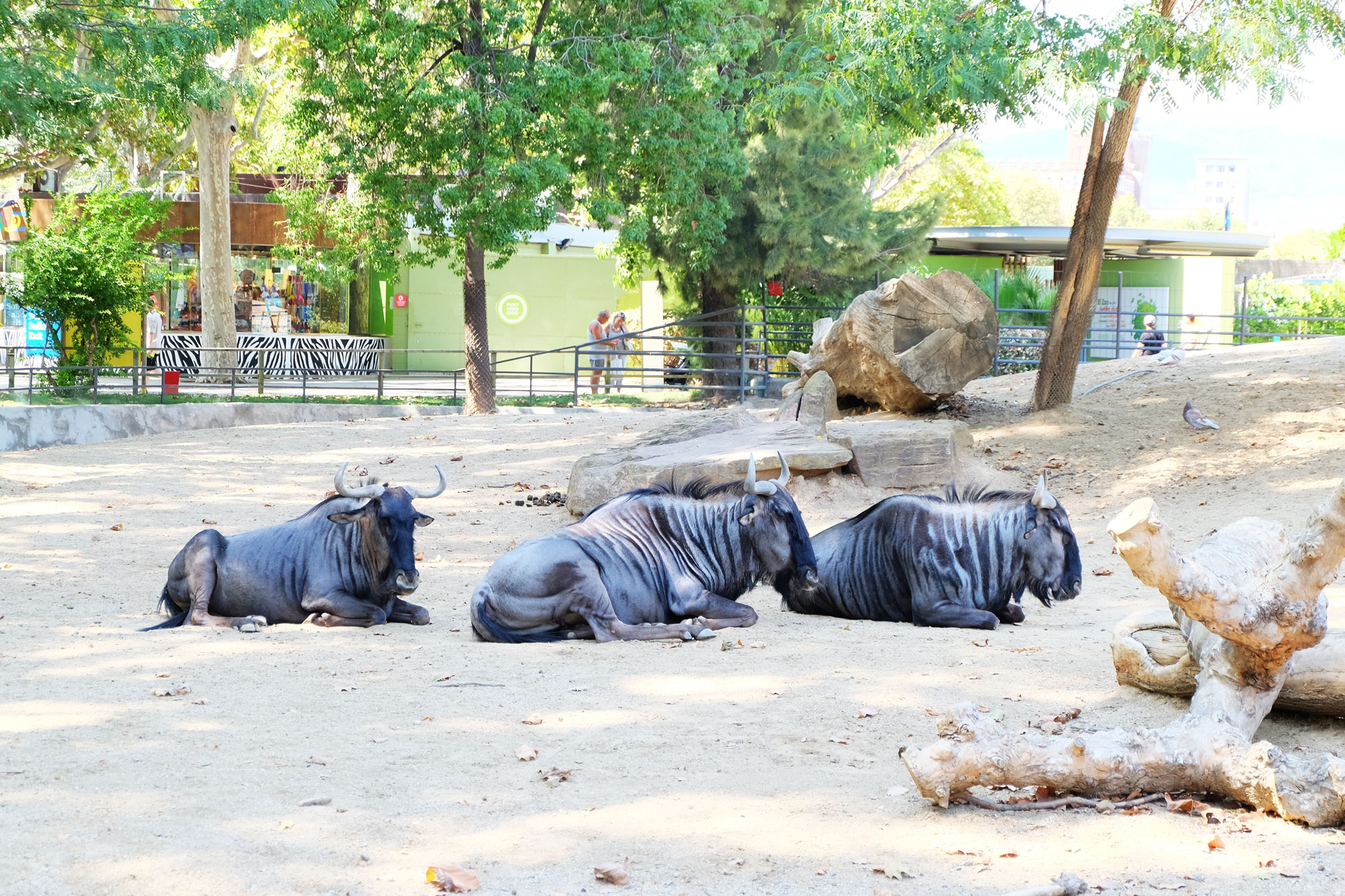 zoo-barcellona-gnu