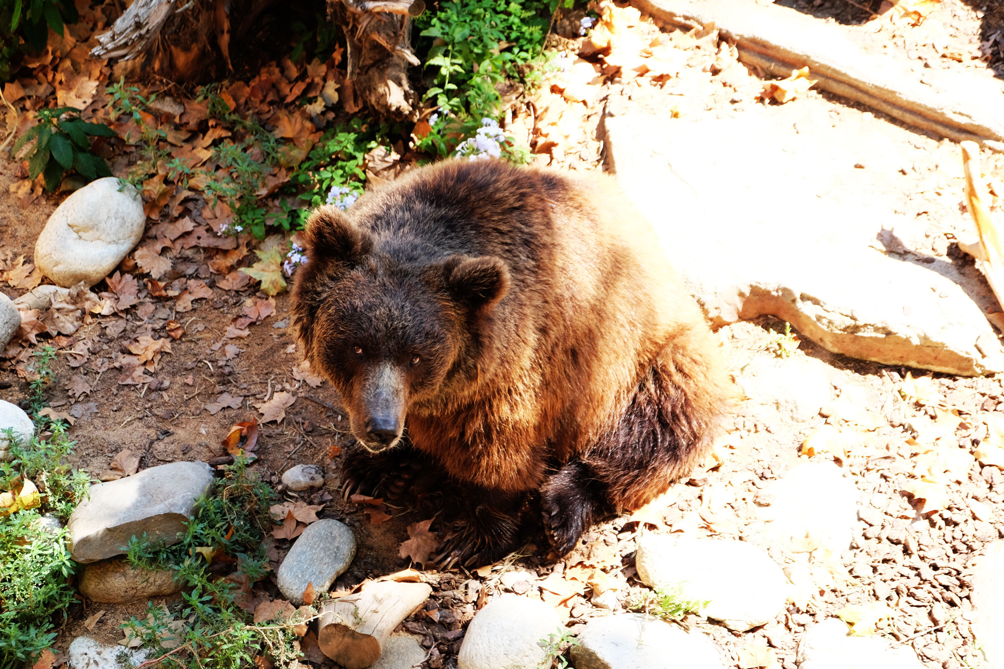 zoo-barcellona-orso-bruno