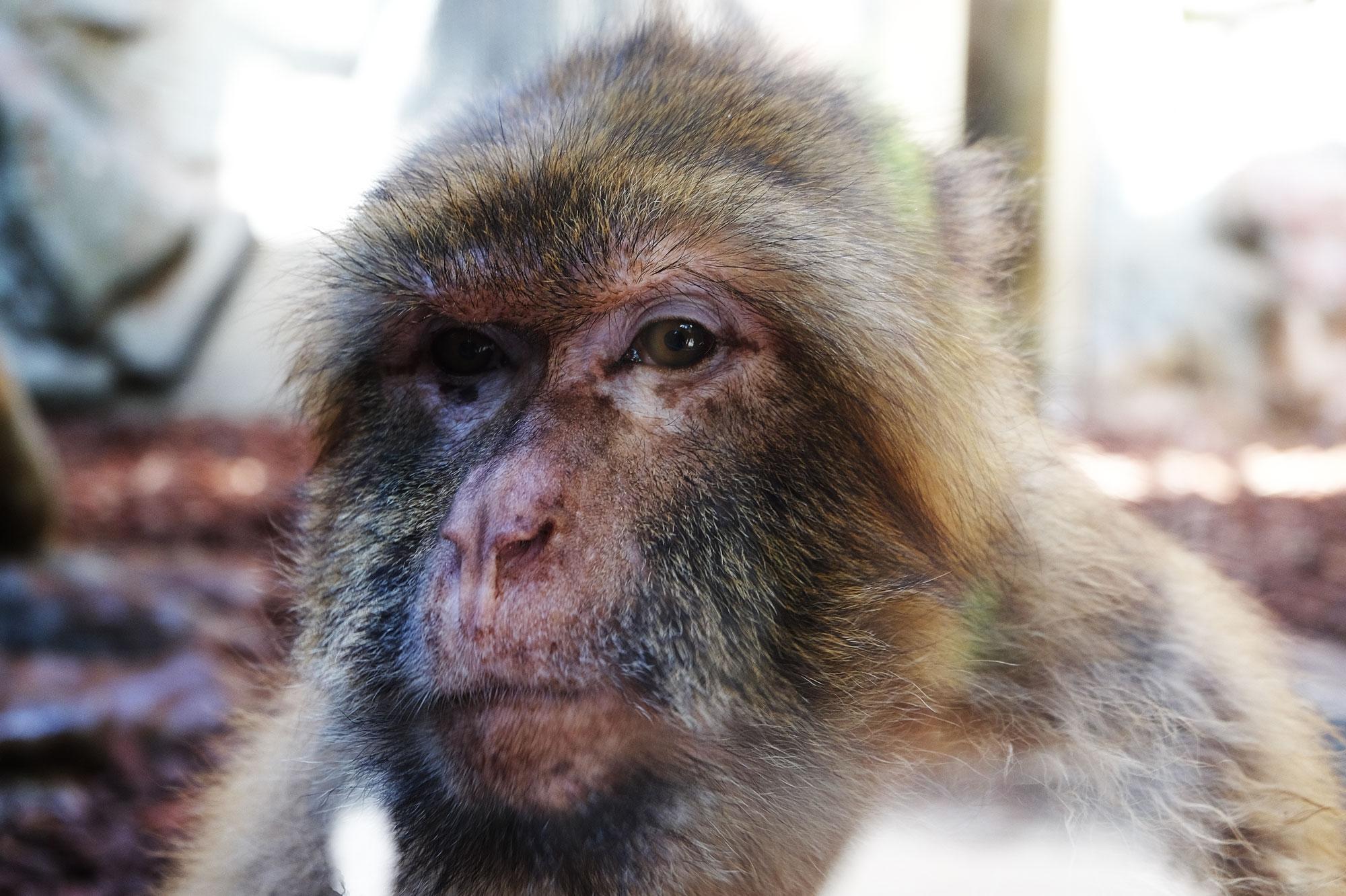 zoo-barcellona-scimmie