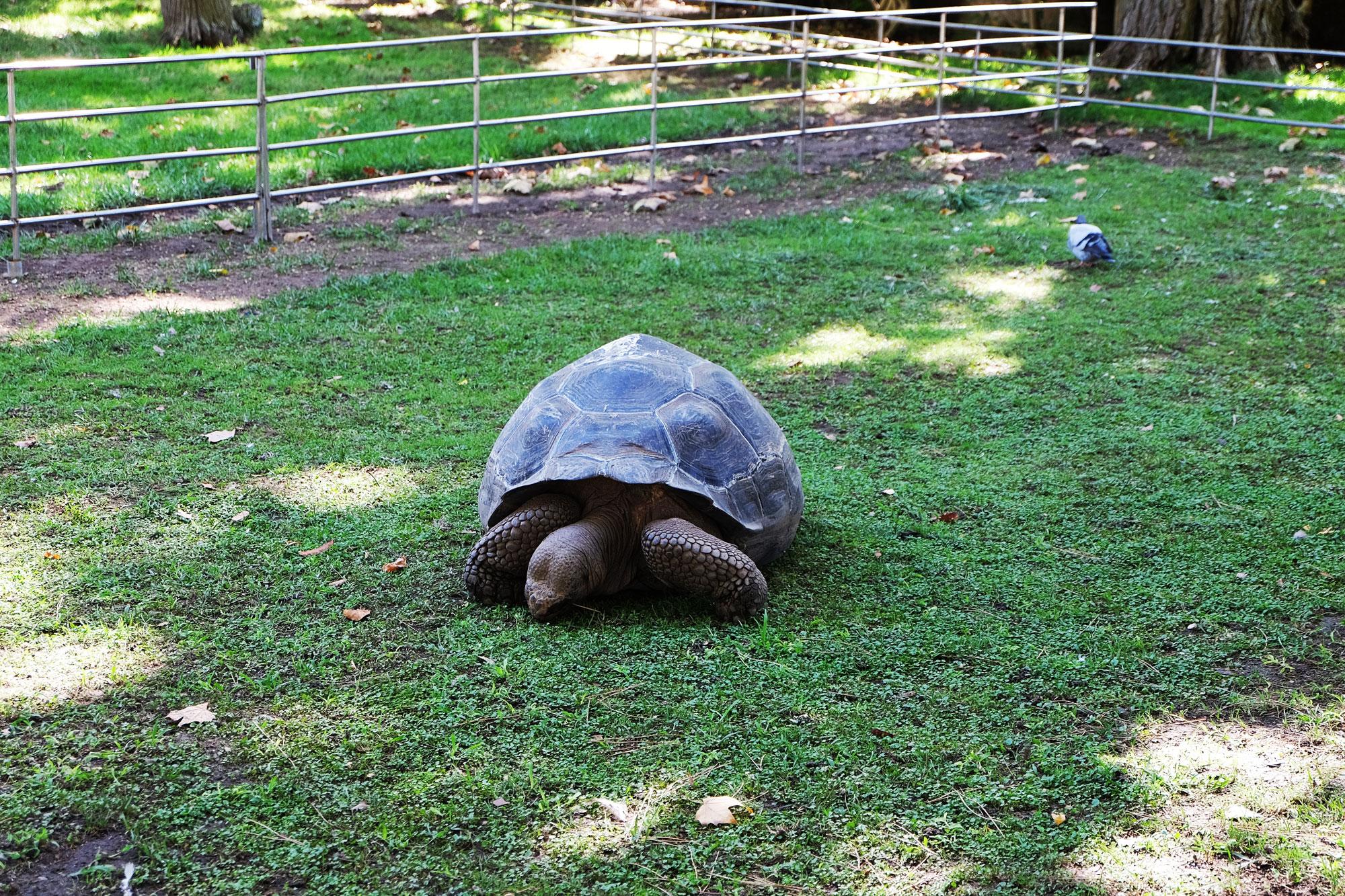 zoo-barcellona-tartaruga