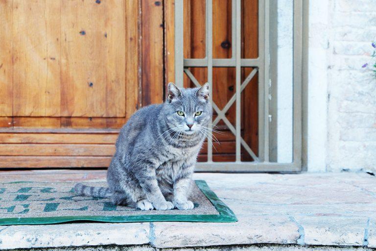 Umbria Arrone gatto
